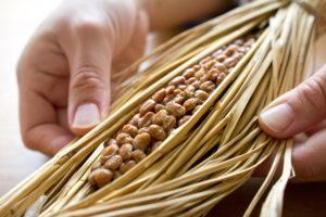 納豆を食べるとぐっすり眠れる!その効果の秘密とは?